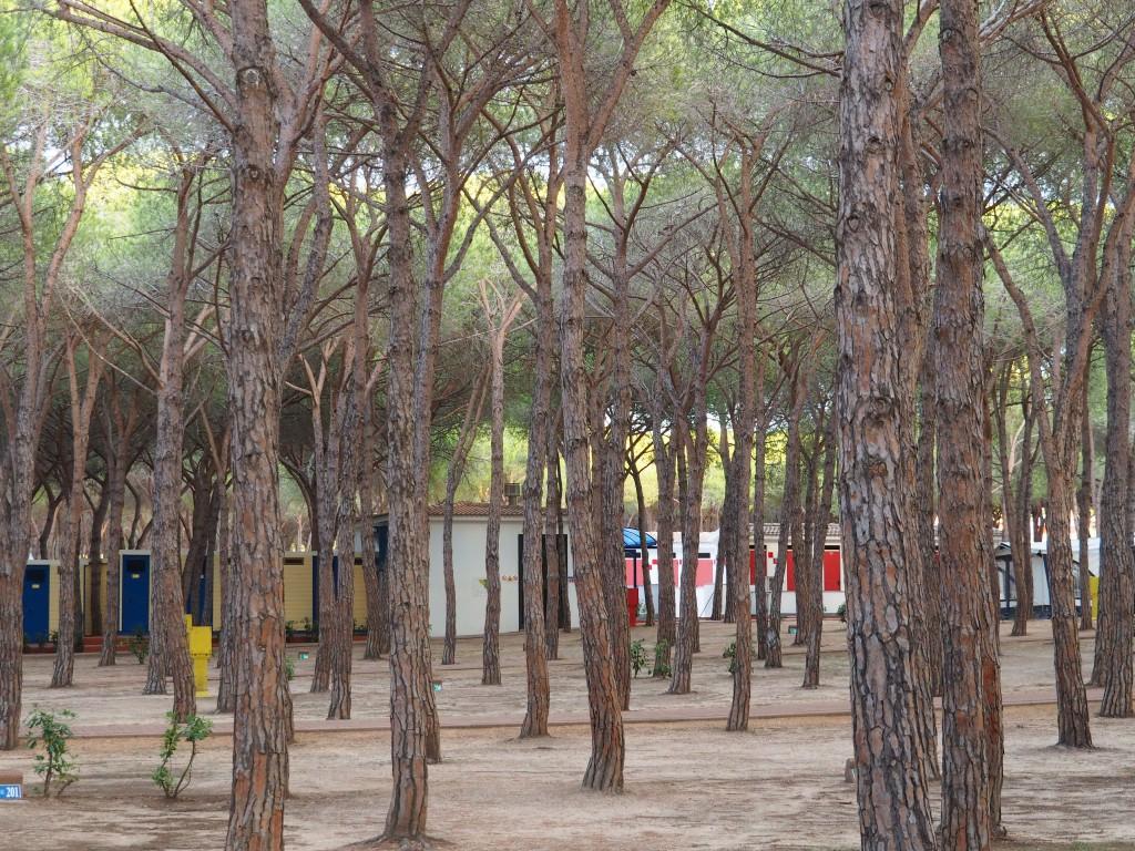 Bäumelabyrinth