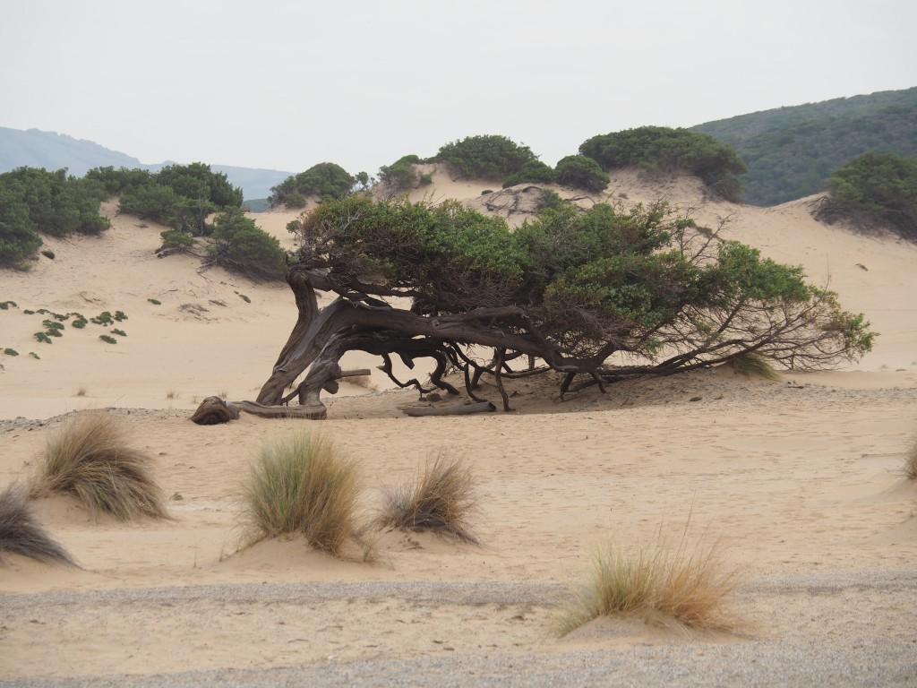 Dünen Costa Verde