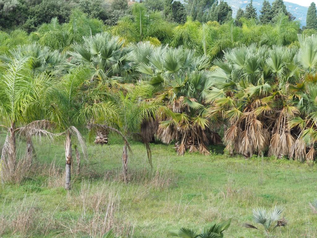üppige Vegetation