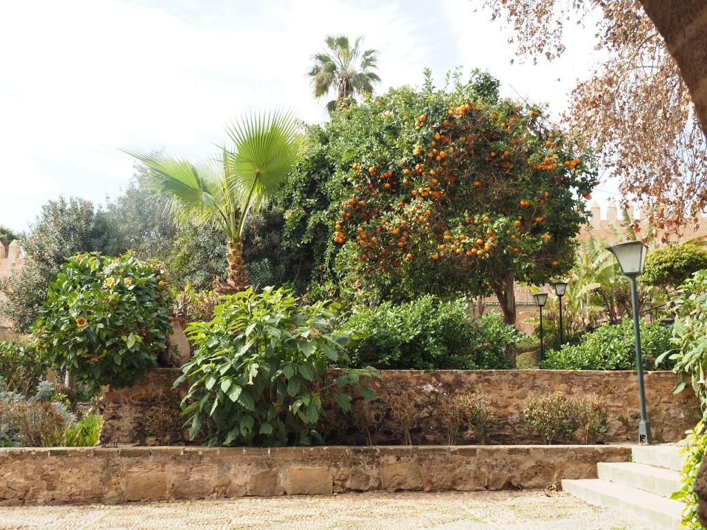 Blick in den andalusischen Garten