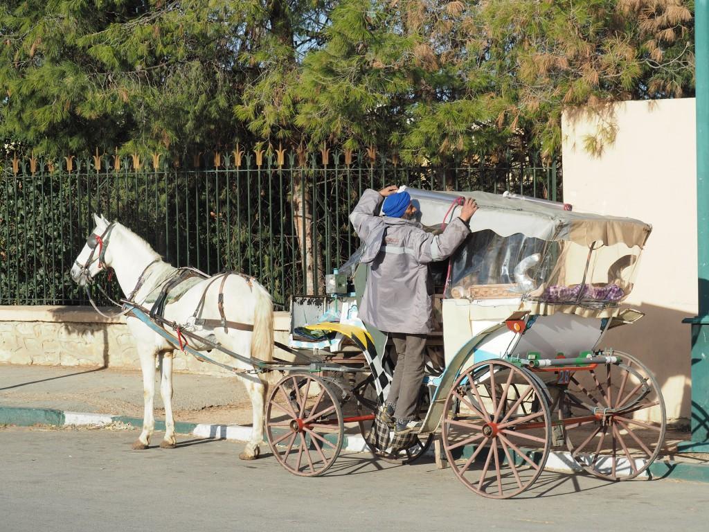 Meknes mit der Kutsche