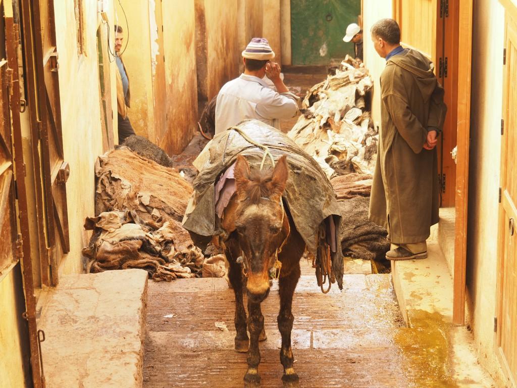 Tierhäute auf dem Weg in die Gerberei