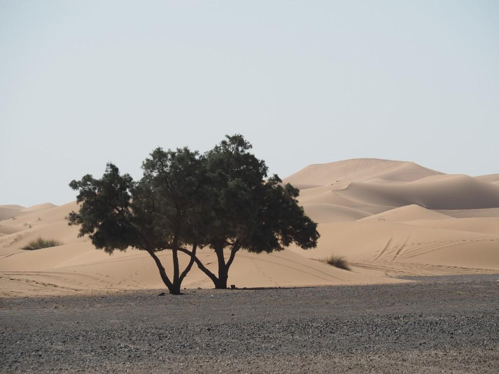 Auf dem Weg durch die Hamada mit Blick auf Erg Chebbi