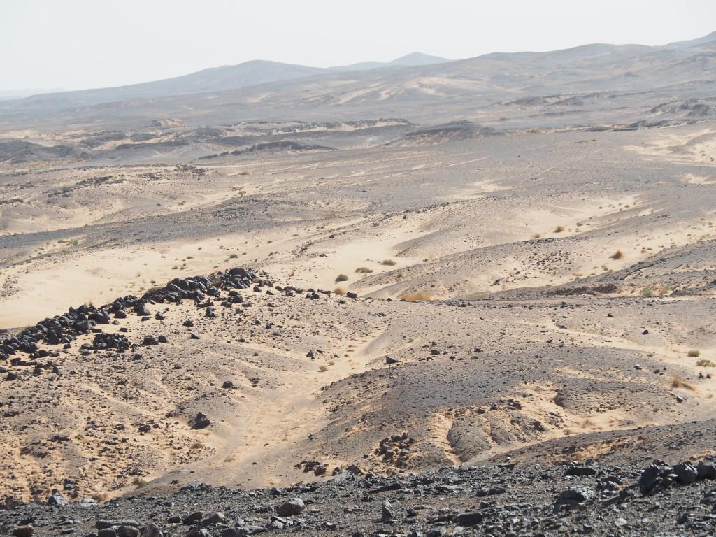 Hammada mit Blick nach Algerien