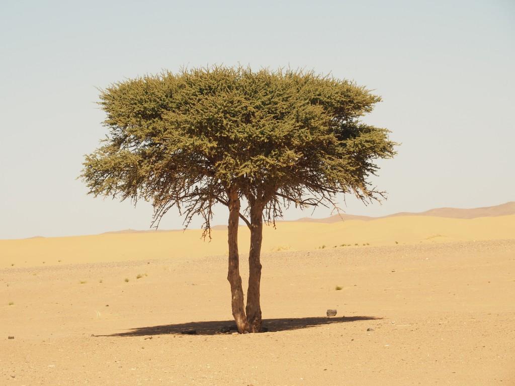 Ddurch die Wüste