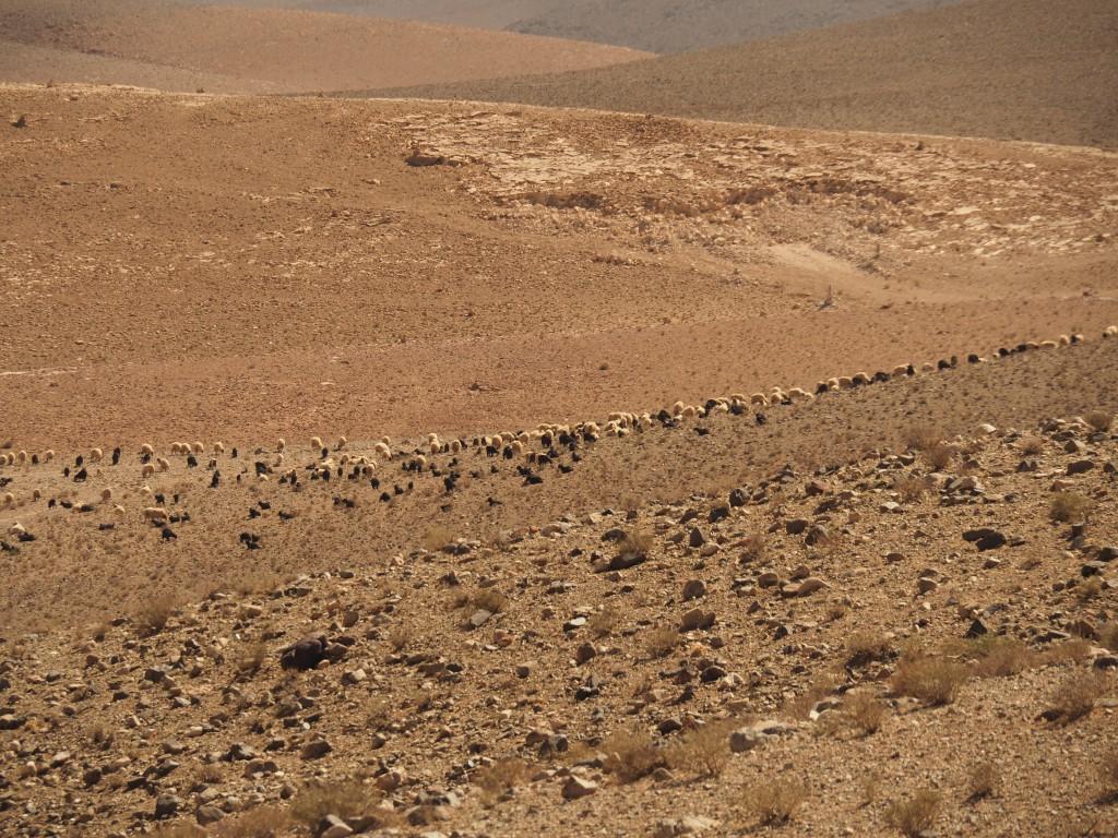 Hochplateau zwischen Tinerhir und Boumalne du Dades