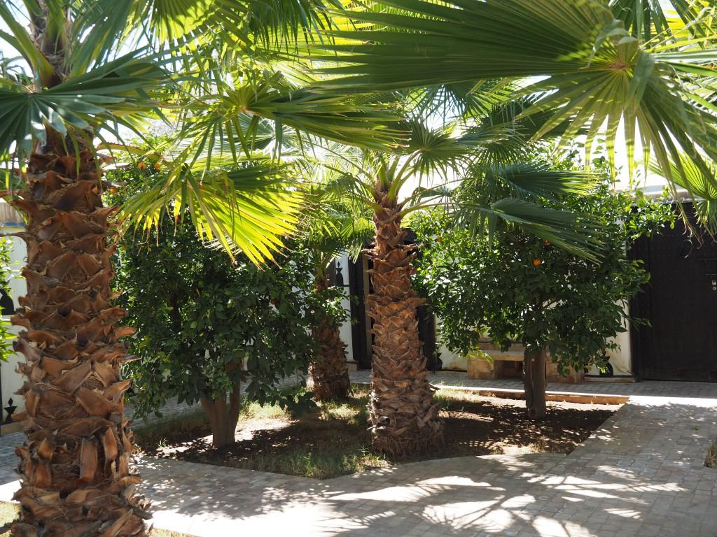 ....Orangenbäume und Palmen im Vorgarten