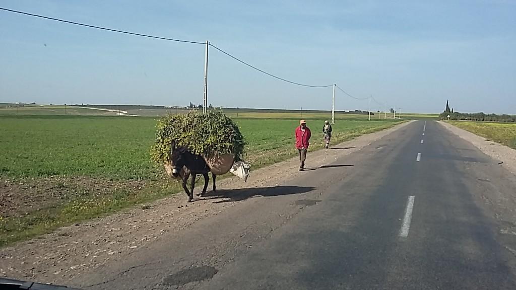 Am Weg nach Mohammedia