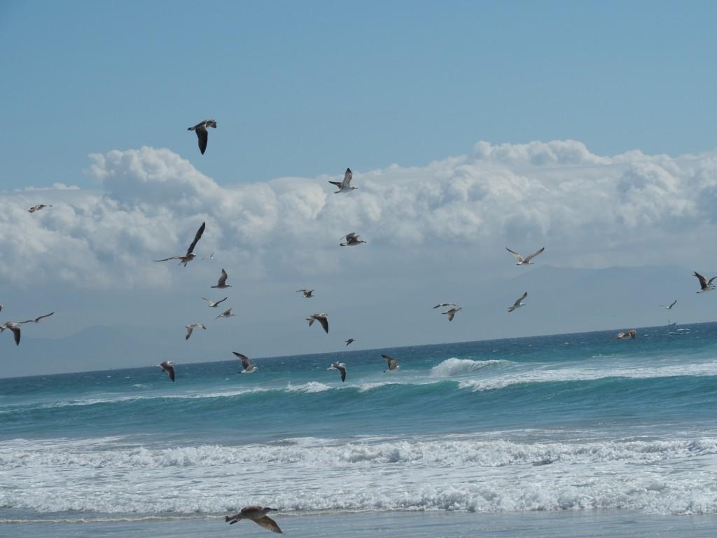 Am Strand von Tarifa