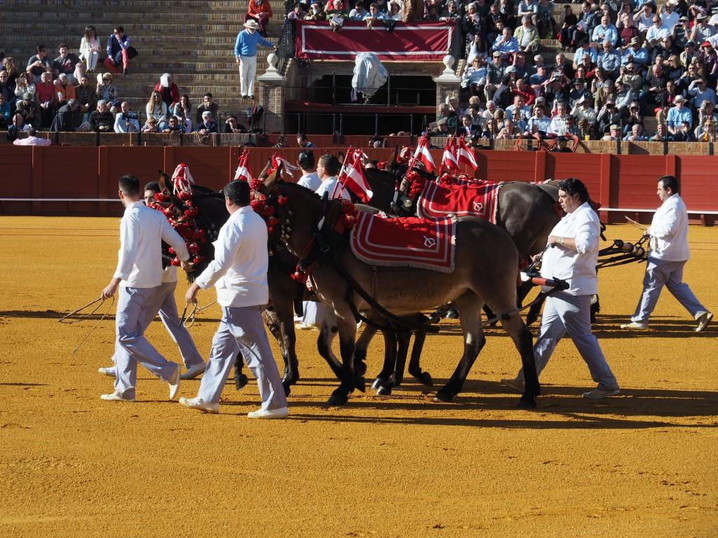 Pferde schleifen den toten Stier würdelos aus der Arena