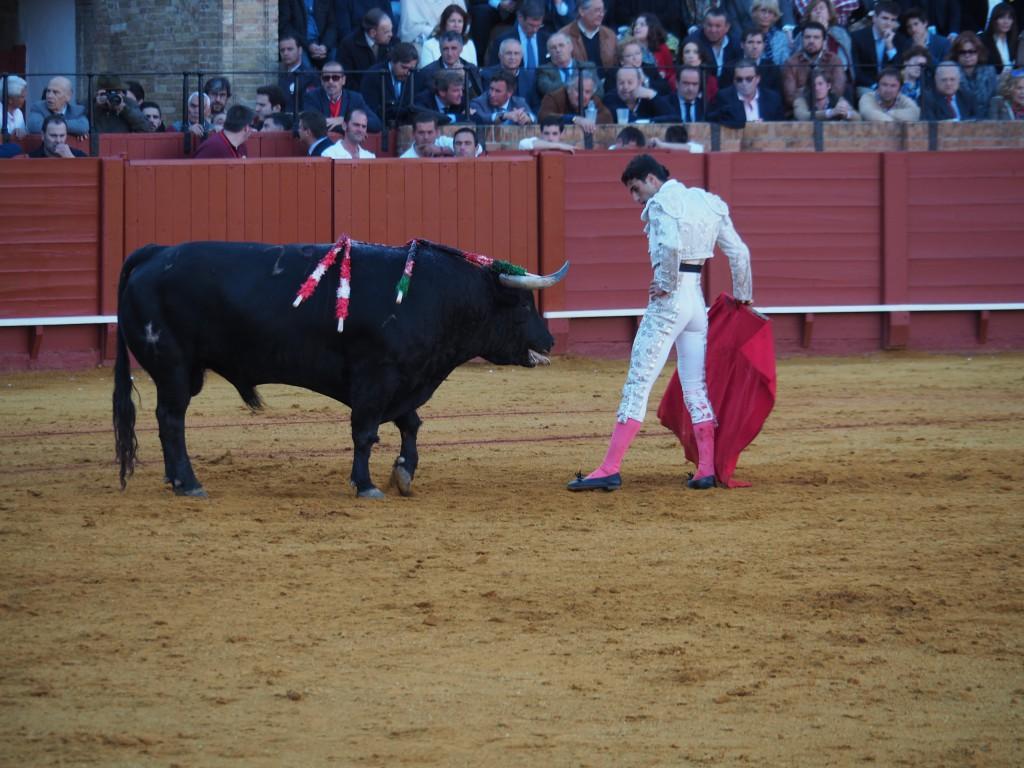 Stierkampf Sevilla