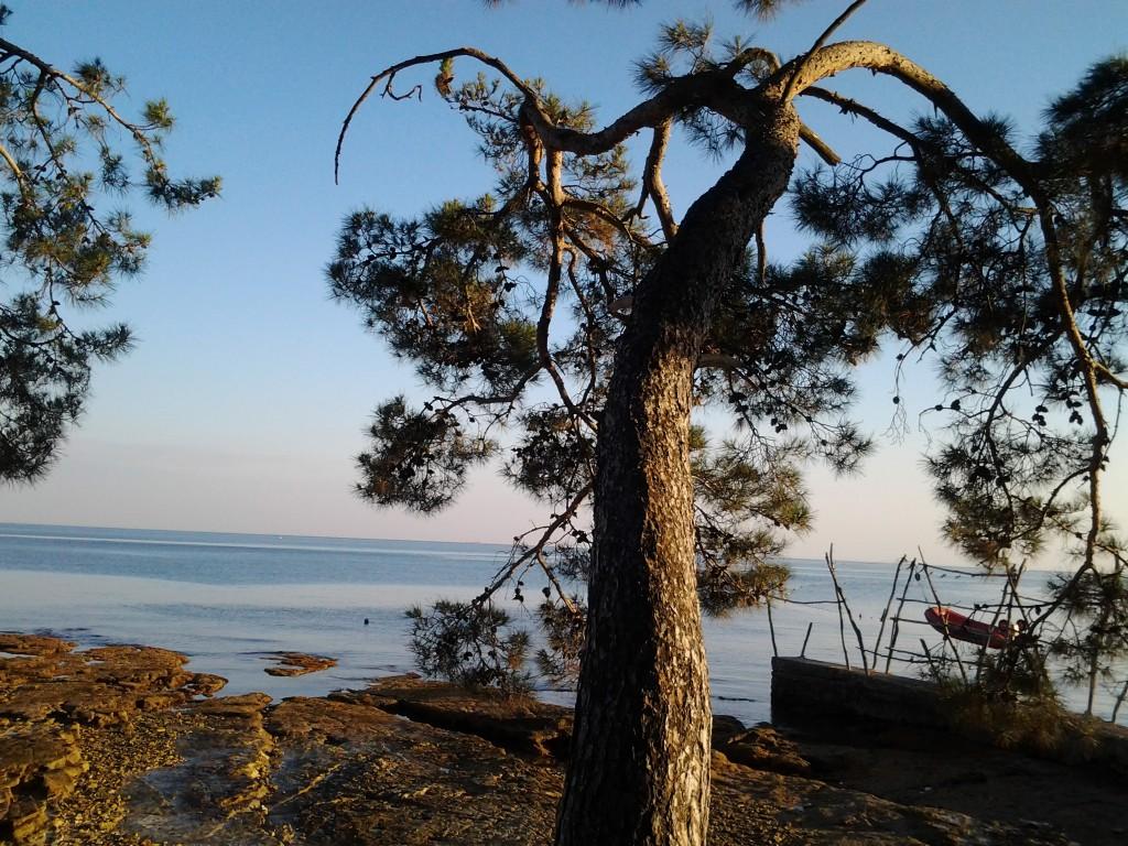 Savudrija Camping Pineta
