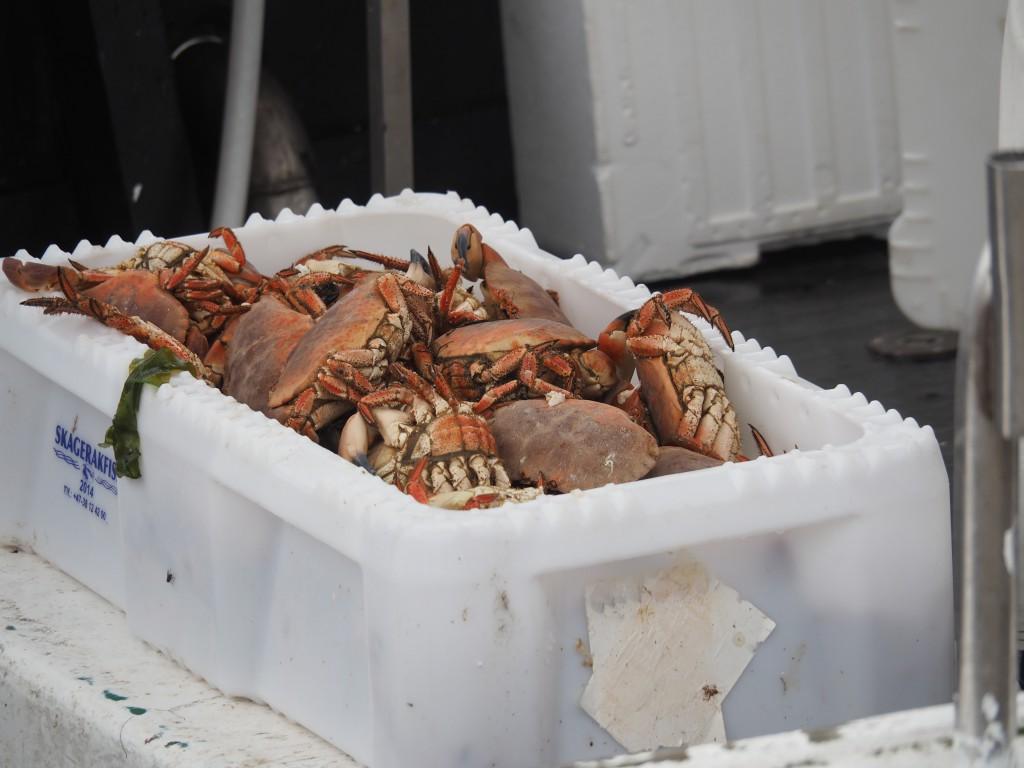 Krabbenverkauf Grimstad