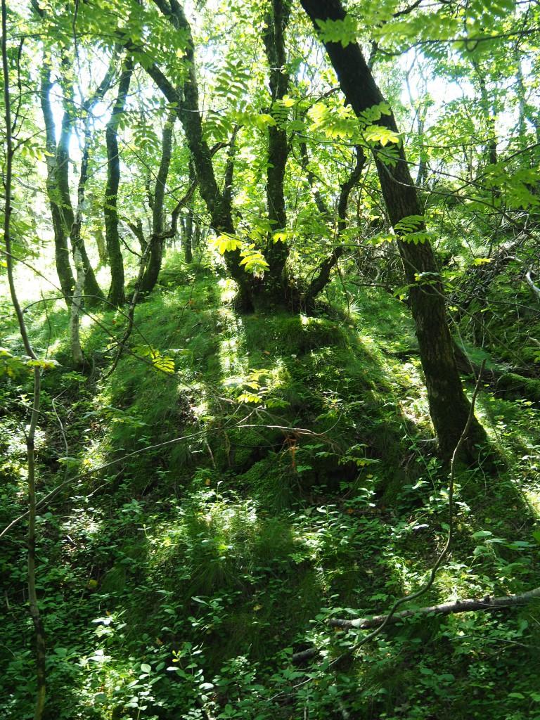 .....durch Wald und Sumpf